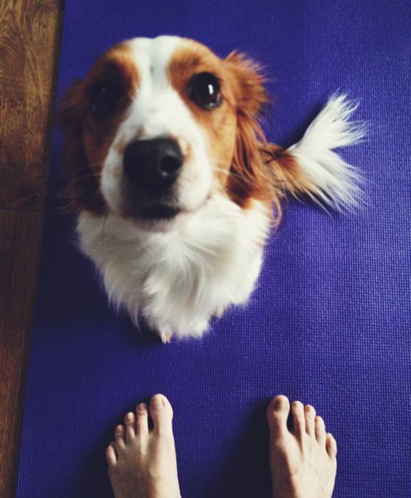 Yoga med hund