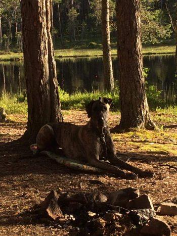 Camphund